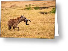 Hungry Hyena Greeting Card by Adam Romanowicz