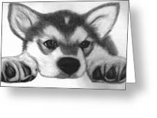 Huskie Pup Greeting Card by Susan Barwell
