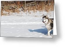 Huskies In Heaven Greeting Card by Peter  McIntosh