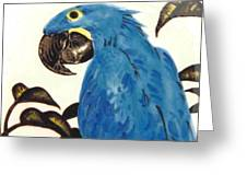 Hyacinth Macaw Greeting Card by Dy Witt