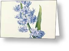 Hyacinth Greeting Card by Pierre Joseph Redoute