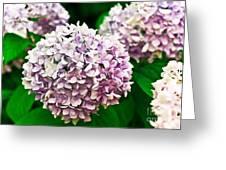 Hydrangea Purple Greeting Card by Ryan Kelly