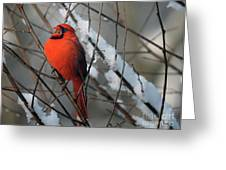 I Am So Ready For Spring Greeting Card by Lois Bryan