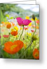 Iceland Poppies Greeting Card by Silke Magino