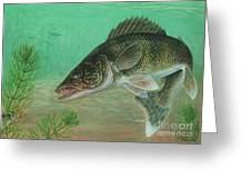 Illustration Of A Walleye Swimming Greeting Card by Carlyn Iverson