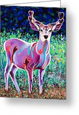 In The Velvet Greeting Card by Bob Coonts