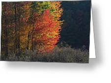 Indiana Colors Greeting Card by Michael L Kimble
