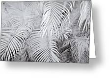 Infrared Palm Abstract Greeting Card by Adam Romanowicz