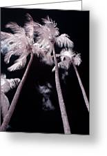 Infrared Palm Trees Greeting Card by Adam Romanowicz