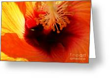 Inner Beauty Greeting Card by Linda Knorr Shafer