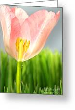 Inside Of A Pink Tulip Greeting Card by Sandra Cunningham
