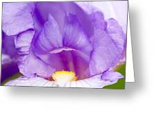 Iris Blossom Greeting Card by Dina Calvarese