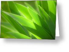 Iris Leaves Greeting Card by Utah Images