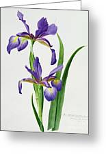 Iris Monspur Greeting Card by Anonymous