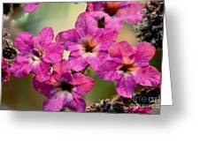 Irridescent Pink Flowers Greeting Card by Ryan Kelly