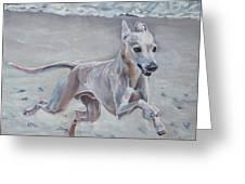 Italian Greyhound On The Beach Greeting Card by Lee Ann Shepard