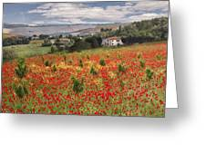 Italian Poppy Field Greeting Card by Sharon Foster