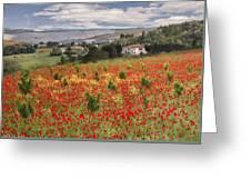 Italian Poppy Field Greeting Card by Sharon Foster
