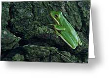 Its Hard To Be Green Greeting Card by Douglas Barnett