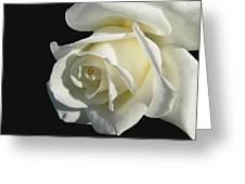 Ivory Rose Flower On Black Greeting Card by Jennie Marie Schell