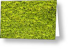 Ivy Wall Greeting Card by Andy Smy