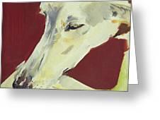 Jack Swan I Greeting Card by Sally Muir