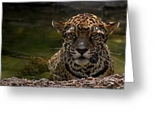 Jaguar In The Water Greeting Card by Sandy Keeton