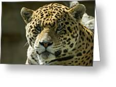 Jaguar Greeting Card by Mary Lane