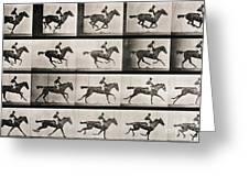 Jockey on a galloping horse Greeting Card by Eadweard Muybridge