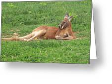 Joey Relaxing Greeting Card by James and Vickie Rankin
