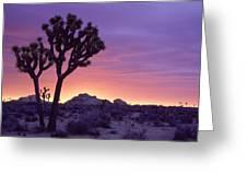 Joshua Tree Sunrise Greeting Card by Eric Foltz