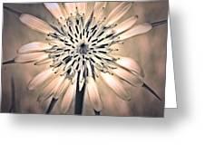 July 1 2010 Greeting Card by Tara Turner
