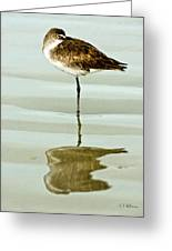Just Being Coy Greeting Card by Christopher Holmes