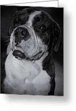Just Handsome II Greeting Card by DigiArt Diaries by Vicky B Fuller