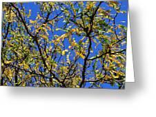 Kaleidoscope Greeting Card by Corinne Rhode