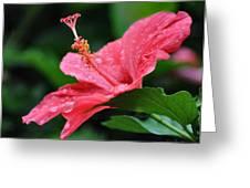 Kauai Beauty Greeting Card by Joe Bonita