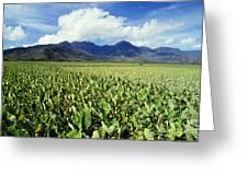 Kauai, Wet Taro Farm Greeting Card by Bob Abraham - Printscapes