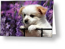 Kc In Flowers Greeting Card by Marjorie Imbeau