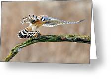 Kestrel Falcon Hunting On The Wing Greeting Card by Scott  Linstead