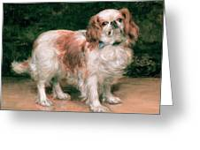 King Charles Spaniel Greeting Card by George Sheridan Knowles