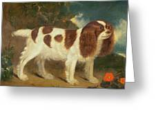 King Charles Spaniel Greeting Card by William Thompson