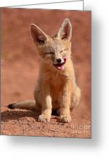Kit Fox Pup Mid-lick Greeting Card by Max Allen