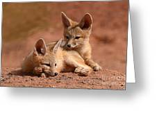Kit Fox Pups On A Lazy Day Greeting Card by Max Allen