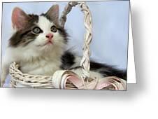 Kitten In Basket Greeting Card by Jai Johnson