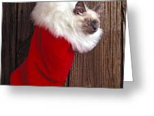 Kitten in stocking Greeting Card by Garry Gay