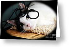Kitty Cuteness Soft And Sweet Greeting Card by Andee Design
