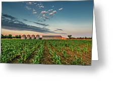 Knee High Sweet Corn Greeting Card by Steven Sparks