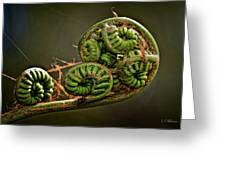 Knotted Greeting Card by Christopher Holmes