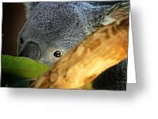 Koala Bear  Greeting Card by Anthony Jones