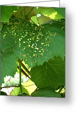 Lace In The Vines Greeting Card by Mindy Newman